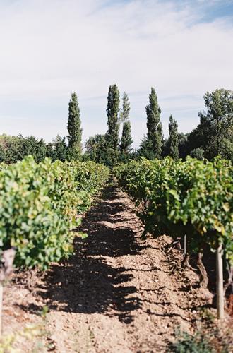 Фото №3 - Родственники шампанского: креман, франчакорта, кава и другие