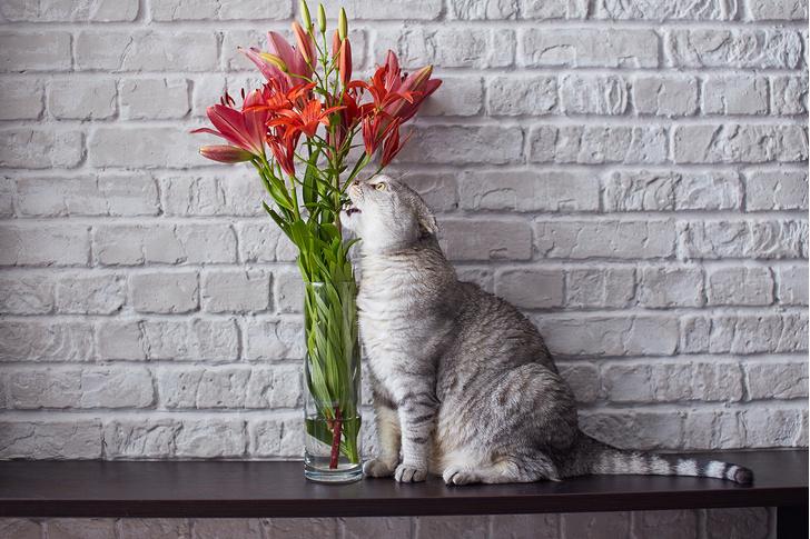 Фото №5 - 9 популярных цветов, которые смертельно опасны для котов