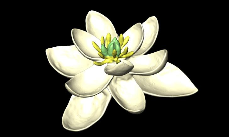 Фото №1 - Как выглядел первый цветок на Земле