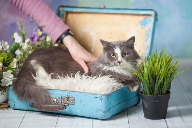 Фото №2 - Котопёс на карантине: кошка Анфиса и пес Лион