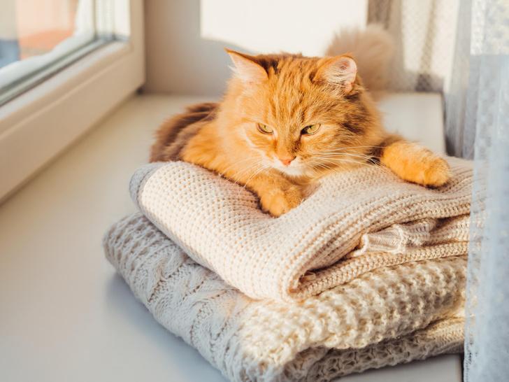Фото №3 - 5 причин, почему брать кошку или собаку в постель— плохая и опасная идея