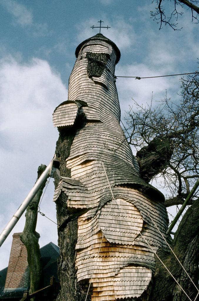 Фото №1 - Вернуться к корням: 7 самых экзотичных деревьев в мире