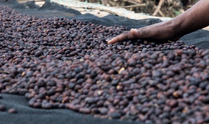 Фото №1 - Раскрыта роль бактерий в формировании вкуса кофе