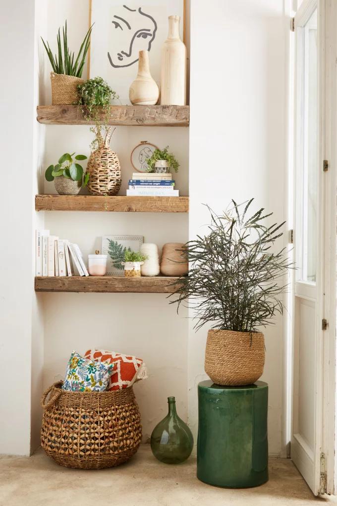Фото №2 - Растения в интерьере: 7 идей для домашнего сада