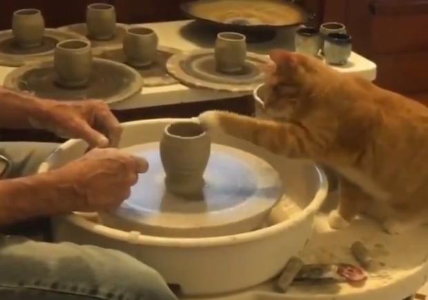 Фото №1 - Кот помогает человеку работать на гончарном круге (видео)