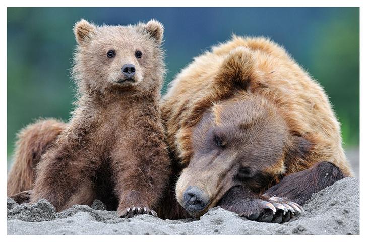 Фото №3 - ВОКРУГ СВЕТА - партнёр фотовыставки «Лесные истории»
