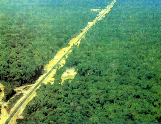 Фото №1 - Пепел амазонского леса