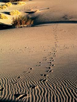 Фото №3 - Песчаные замки Эола