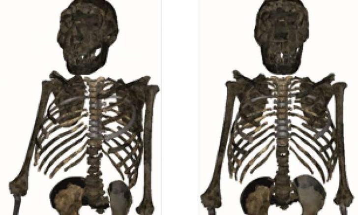 Фото №1 - Ученые воссоздали фигуру Homo erectus