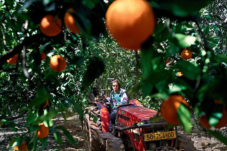 Фото №1 - Апельсиновый ноябрь