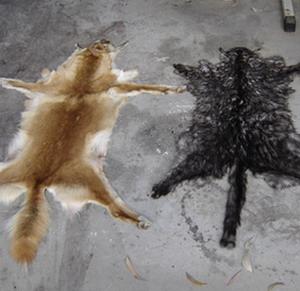 Фото №1 - В ЕС запретят торговлю мехом кошек и собак