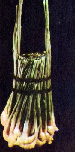 Фото №2 - Скромные шедевры цуцуму