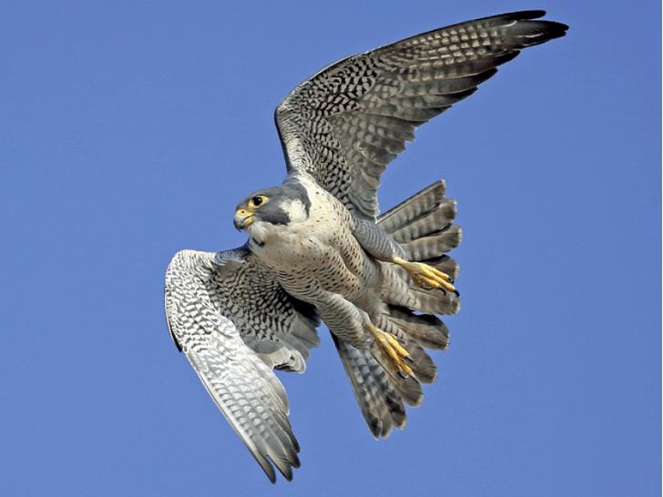 Фото №1 - Россия победила в Евразийском учете птиц