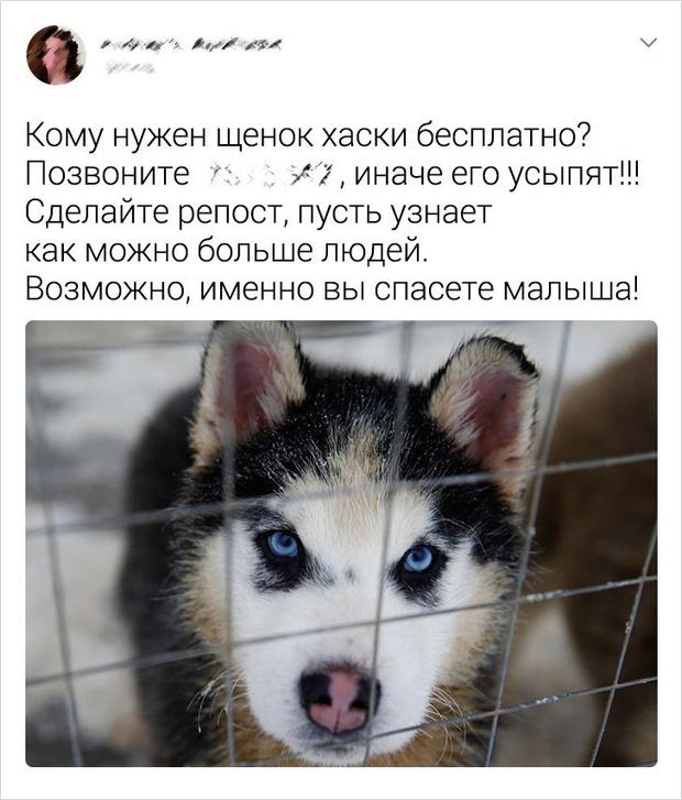 Фото №2 - Как мошенники обманывают людей на «бесплатной» раздаче породистых животных