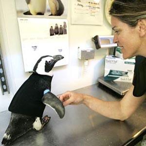Фото №1 - Гидрокостюм для пингвина