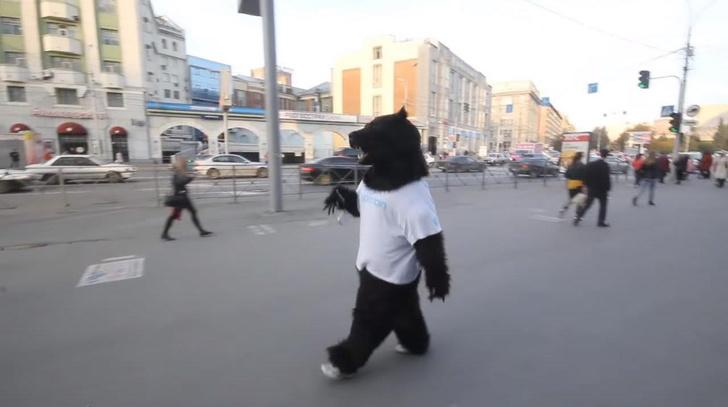 Медведь на улице Новосибирска