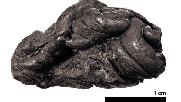 Фото №1 - Ученые воссоздали женщину каменного века по куску смолы, который она жевала