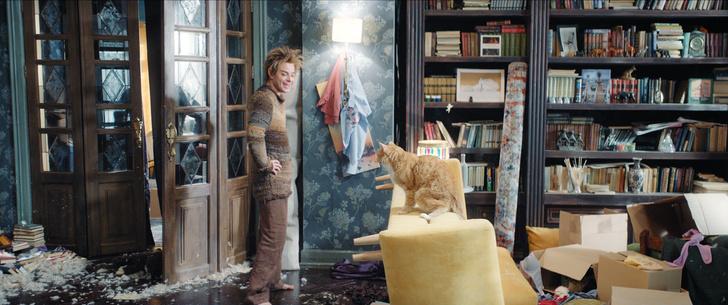 Фото №3 - Мясо в качестве зарплаты, дублеры и тишина на площадке: как работают коты-актеры