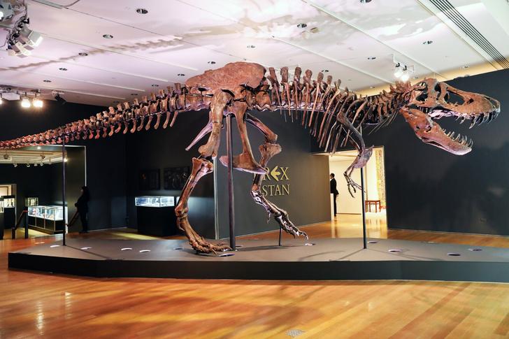 Фото №1 - Скелет тираннозавра продали на аукционе