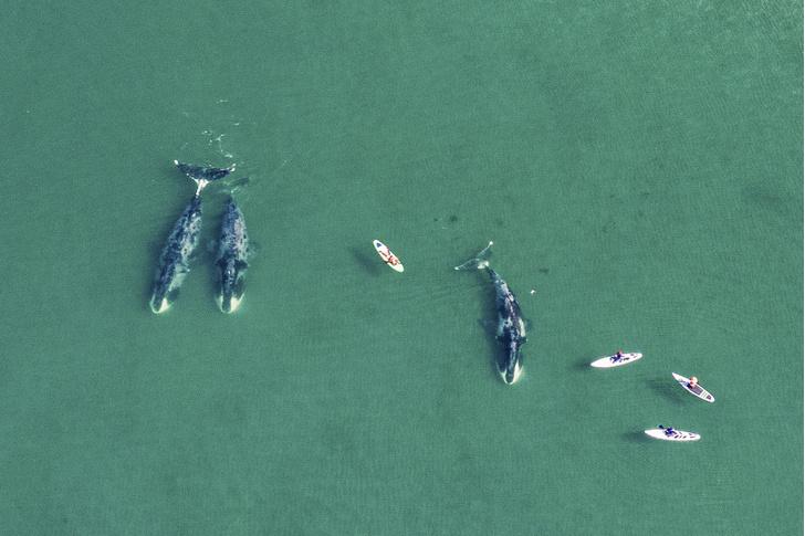 Фото №2 - Проект: китовый инстаграм