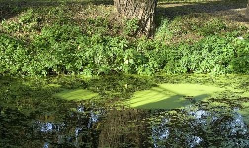 Фото №1 - Число утонувших в Ленобласти с начала лета перевалило за сотню