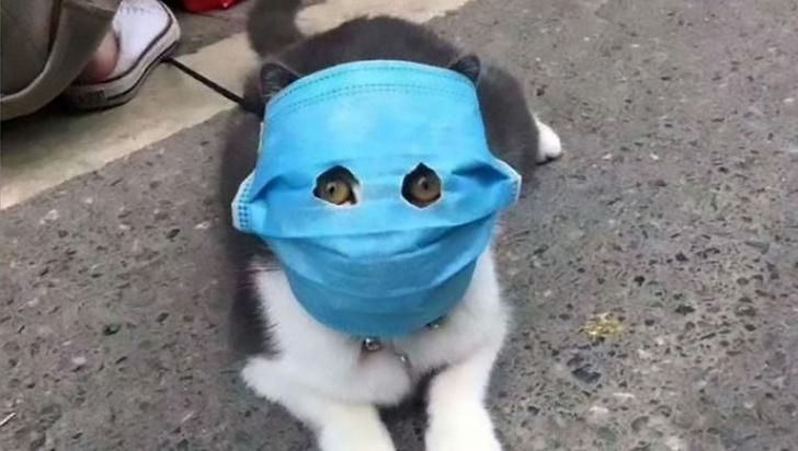 Фото №1 - В Бельгии коронавирус нашли у кота