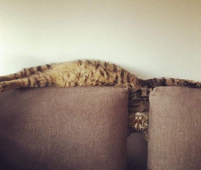 Фото №1 - 30 нехарактерно длинных котов (галерея)