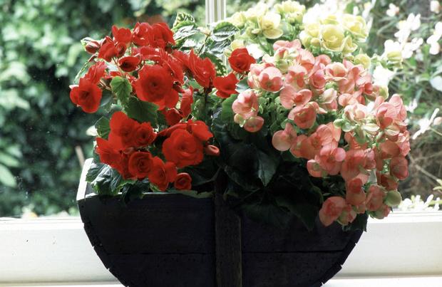 Фото №9 - 10 растений, которые выгоняют из дома плохую энергию