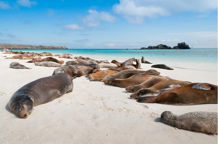 Фото №2 - Назван самый привлекательный для путешественников остров в мире