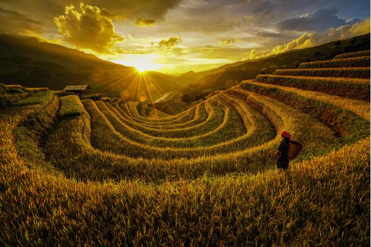 Фото №1 - Рисовые горы