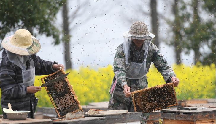 Фото №1 - Пчелы любят ленивых садоводов