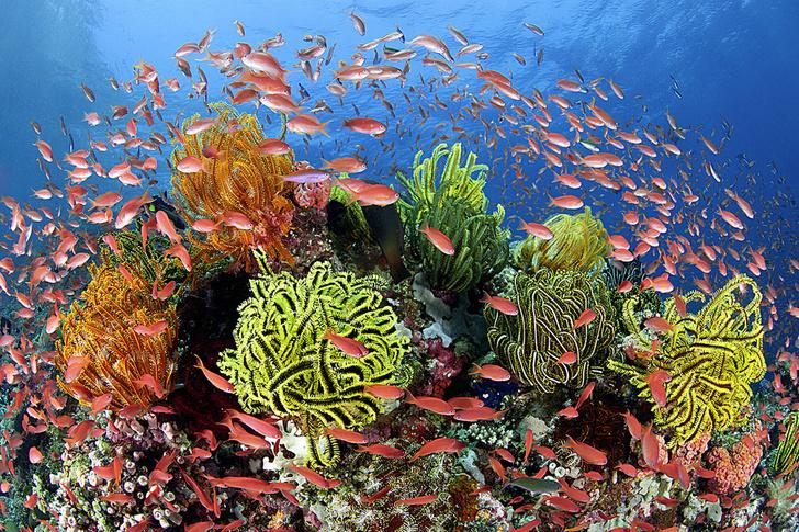 Фото №1 - Музыкальные рифы, сладкая капель, ЭКО для жаб и другие новые открытия