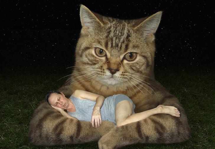 Фото №1 - 16 новых пород кошек