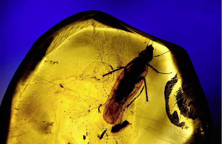 Фото №8 - Доктор зло: почему ни высокие технологии XXI века, ни опыт поколений не помогли истребить тараканов