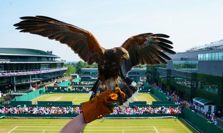 Фото №4 - Игра престола: чем Уимблдон отличается от других теннисных турниров