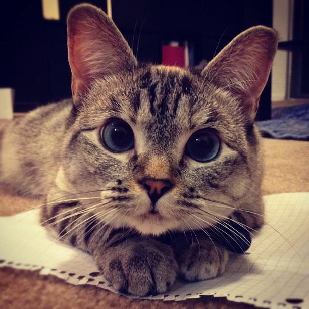 Фото №2 - Названы самые популярные животные в Интернете
