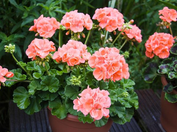 Фото №2 - Домашний доктор: 5 комнатных растений, которые защищают от вирусов