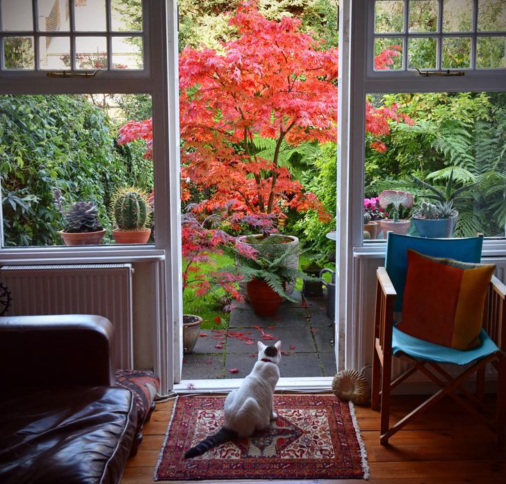 Фото №1 - ТЕСТ: какой элемент декора вам стоит купить осенью?
