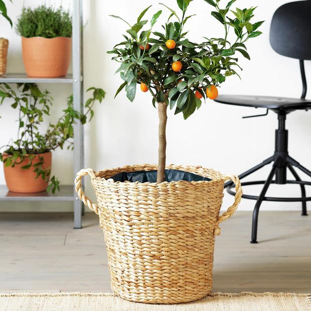 Фото №11 - Садовые кашпо для крупных растений