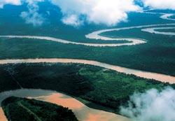 Фото №5 - Борнео, колыбель эволюции