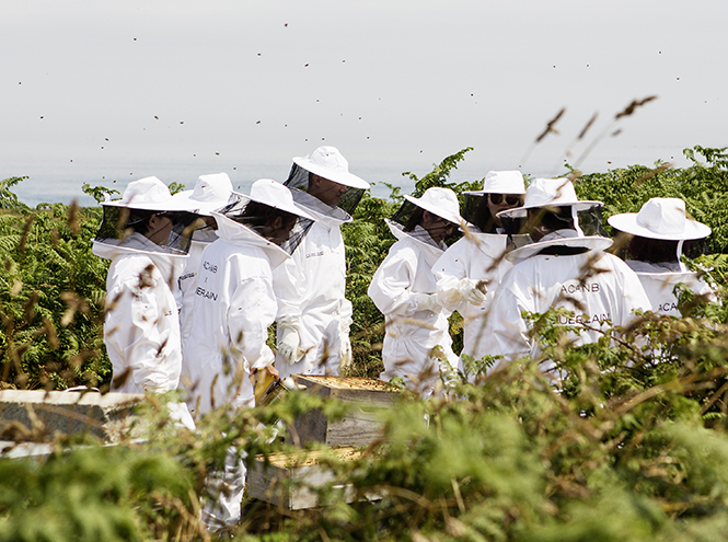 Фото №7 - Пчела с эффектом anti-age