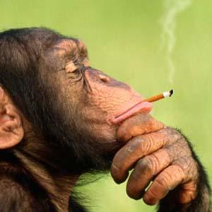 Фото №1 - Курение приводит к слабоумию