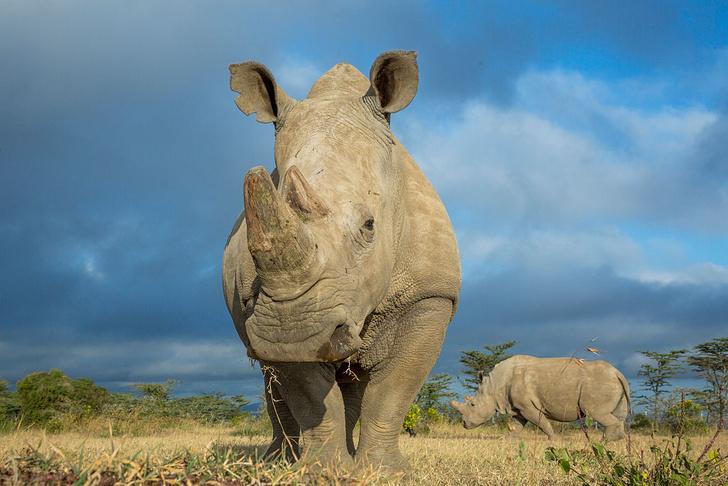 Фото №8 - Гиганты планеты: самые большие животные, которые сейчас живут на свете