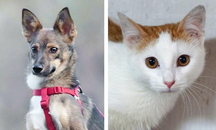 Фото №1 - Котопёс недели: кот Васаби и собака Джуна