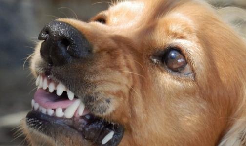 Фото №1 - За год более 9,4 тысяч петербуржцев пострадали от укусов животных