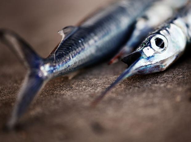 Фото №8 - 10 видов рыбы, которую лучше не есть