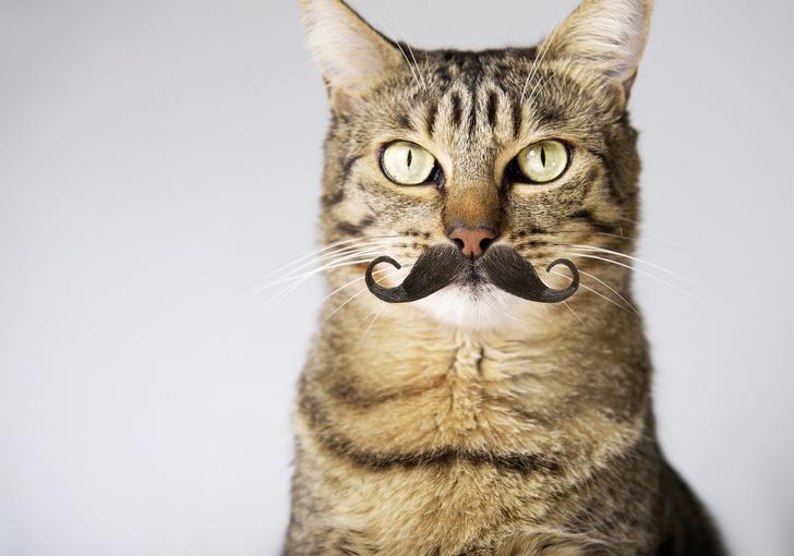 Фото №6 - Код кота: 31 ответ на вопросы котовладельца