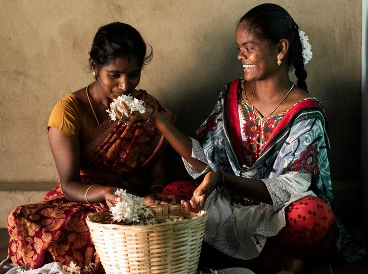 Фото №2 - Как жасмин поможет улучшить экологию, парфюмерию и социальное благополучие?