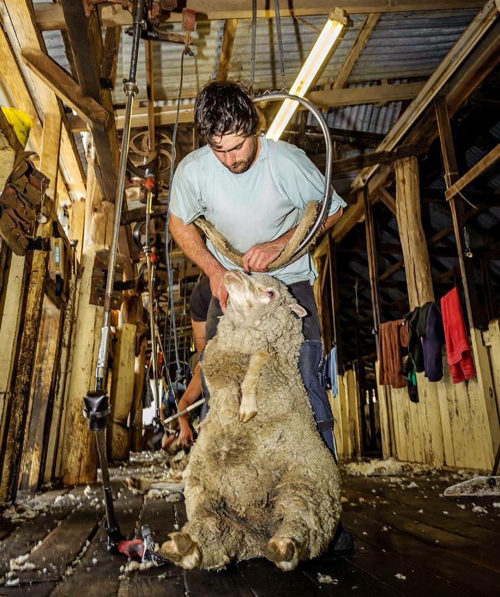 Фото №4 - За черным пнем: жизнь фермеров австралийского аутбэка