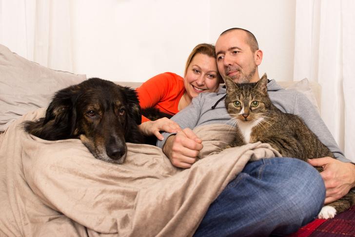 Фото №2 - Ученые выяснили, кто больше любит своих хозяев: кошки или собаки